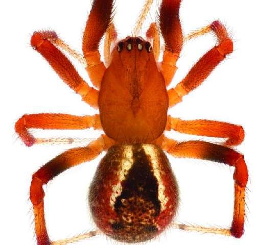 From Darwin to moramora ('take it easy'): Ten new subsocial spider species from Madagascar