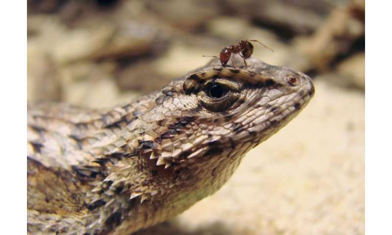 From twitching lizards to noisy frogs, adaptation is often survival of the weird