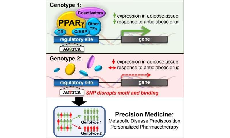 Genetic variation determines response to anti-diabetic drug