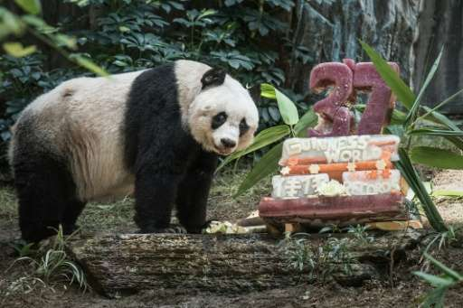 Giant panda Jia Jia stands next to her cake made of ice and fruit juice to mark her 37th birthday at an amusement park in Hong K