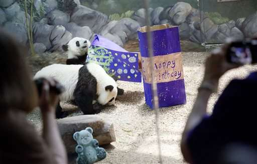 Giant pandas turn 2 at Zoo Atlanta; only living twins in US