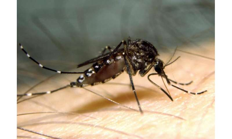 'Good' mozzie virus might hold key to fighting human disease