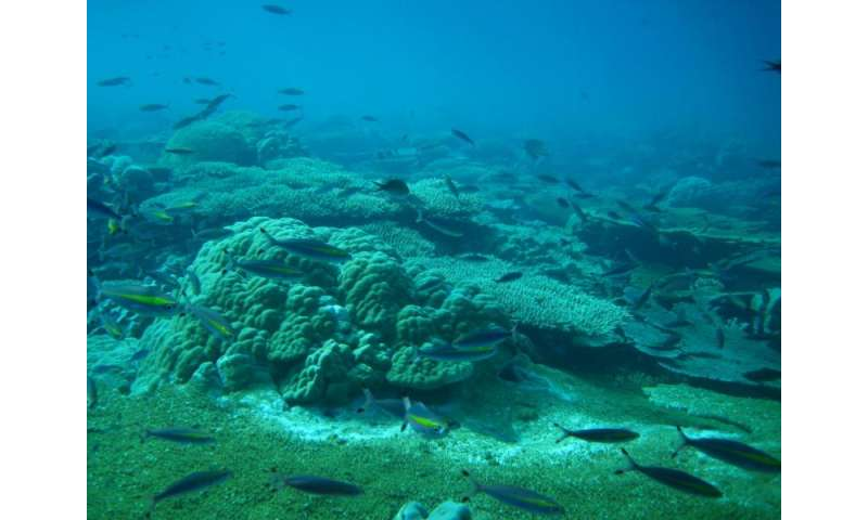 Growth potential remains at risk on even the most remote coral reefs