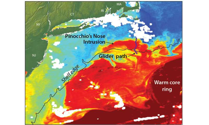 Gulf Stream ring water intrudes onto continental shelf like 'Pinocchio's nose'