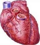Handheld echocardiography ups rheumatic heart dz detection