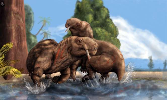 Head-butting and teeth-baring displays in male-male combat appeared 270 million years ago