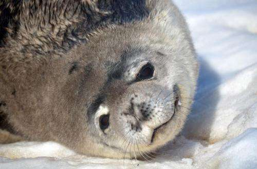 Heart arrhythmias detected in deep-diving marine mammals