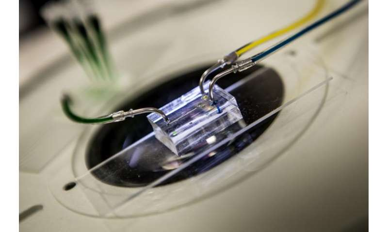Heartbeat on a chip could improve pharmaceutical tests