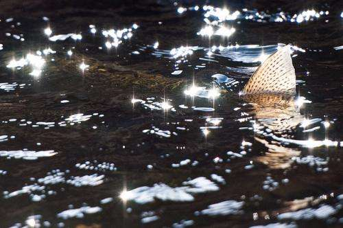 Hidden physics make fish glitter