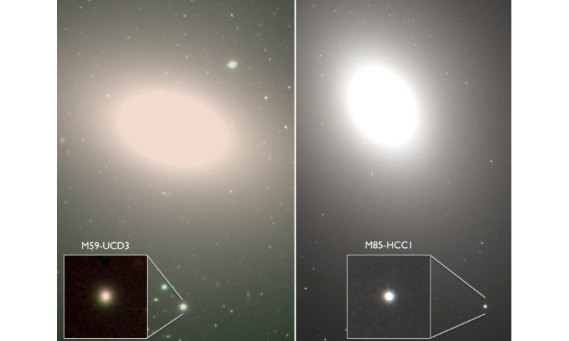 Hiding in plain sight: Undergraduates discover the densest galaxies known