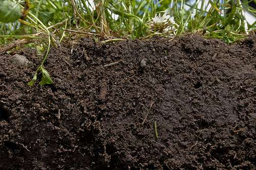 Holistic soil to boost productivity