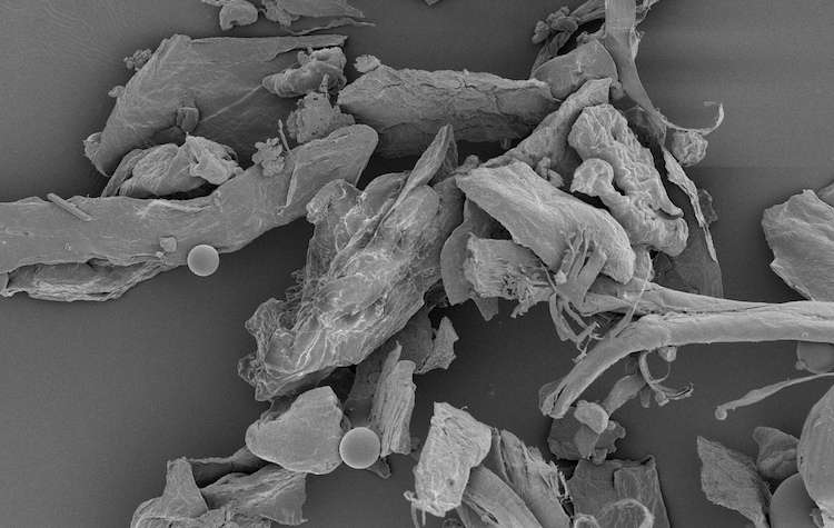 Home sweet microbe: Dust in your house can predict geographic region, gender of occupants