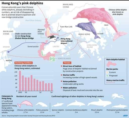 Hong Kong's pink dolphins