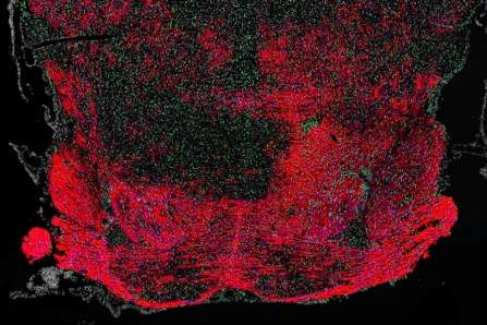 How an FDA-approved drug boosts myelin synthesis