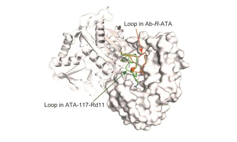 How an important enzyme used in drug production recognizes its substrate