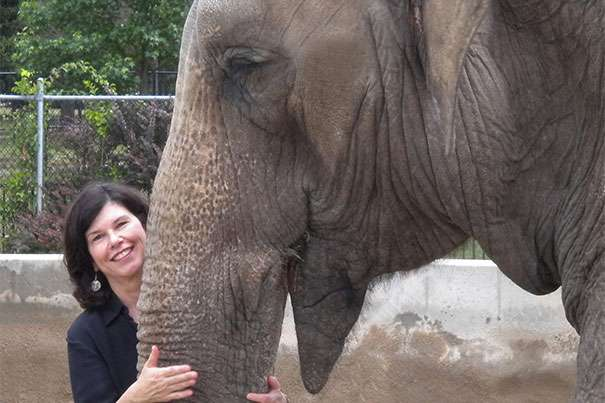 How a system that made elephants half-captive likely ensured their survival