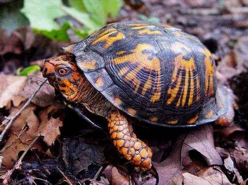 How citizen scientists are creating an atlas of turtles in Connecticut