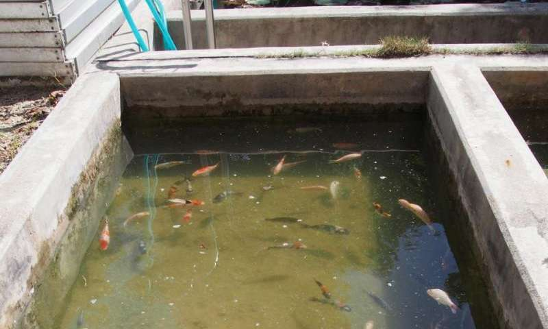 How many organisms do live in this aquatic habitat?