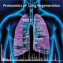 How the lung repairs wounds