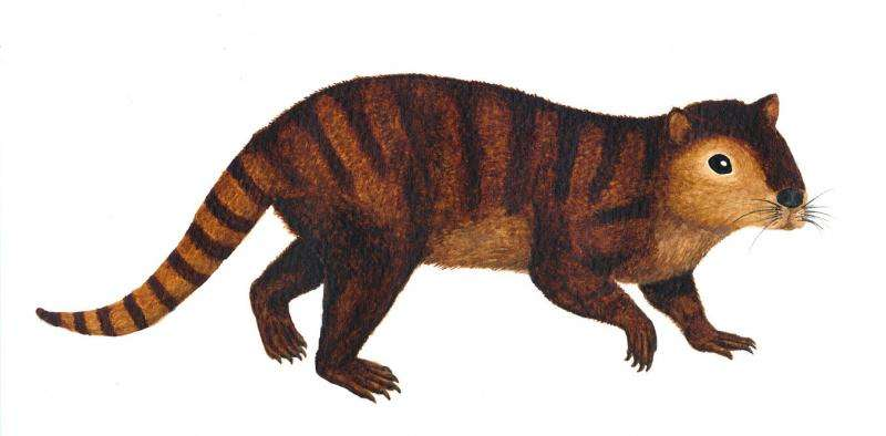 How we found 'prehistoric beaver' that helped mammals inherit Earth after dinosaurs were wiped out