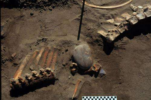 Ice age people hunted horse and camel 13,300 years ago