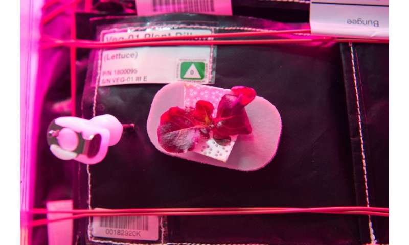 Image: Testing hardware for growing plants and vegetables in space