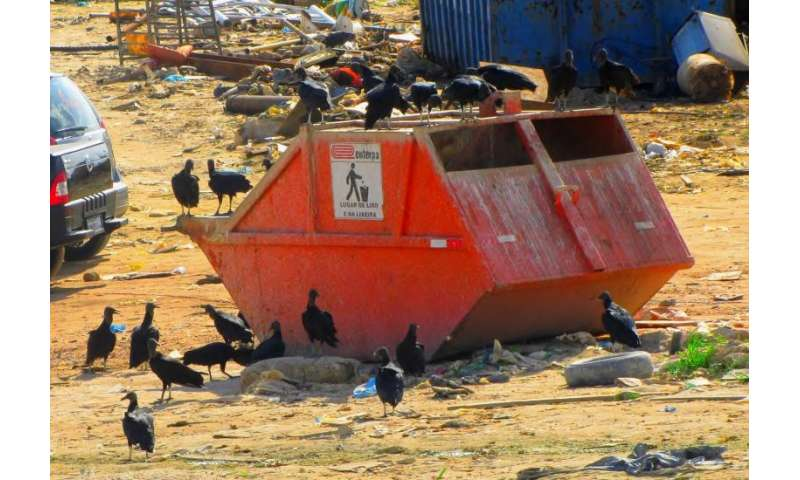 In an urban environment, not all vultures are created equal