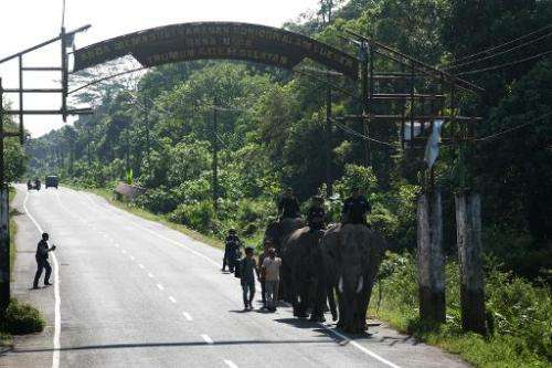 Indonesian forest rangers patrol on Sumatran elephants in Trumon sub-district in province of Aceh, Sumatra island