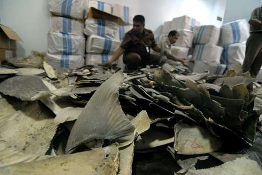 Indonesian officials say that some 3,000 shark fins seized, destined for Hong Kong, are worth one billion rupiah ($72,000) in th