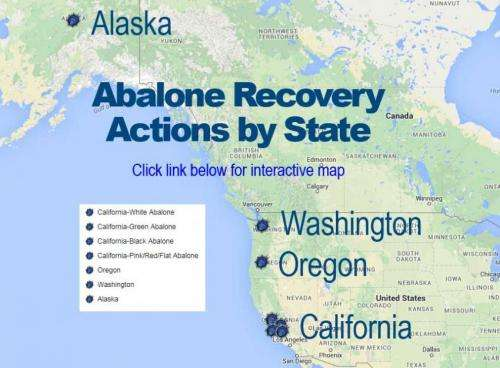Innovative restoration techniques used to rebuild West Coast abalone populations