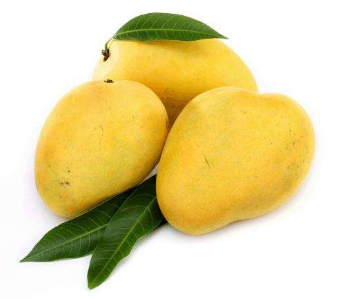 Innovative technology to keep mangoes in excellent condition