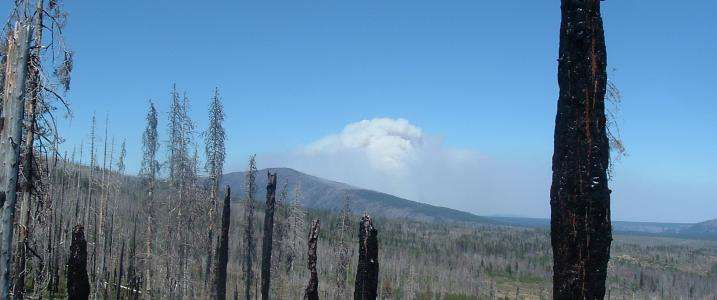 Insect-killed forests pose no additional likelihood of wildfire