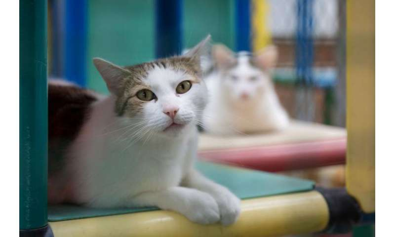 Intestinal parasites are a common cause of diarrhoea in cats