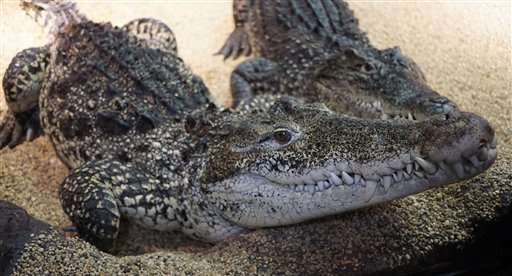 Kids of Cold War crocs going to Cuba on conservation mission
