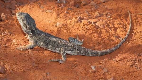 Kings Park reptiles resilient in face of fire
