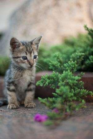 Human Society Madison Cats