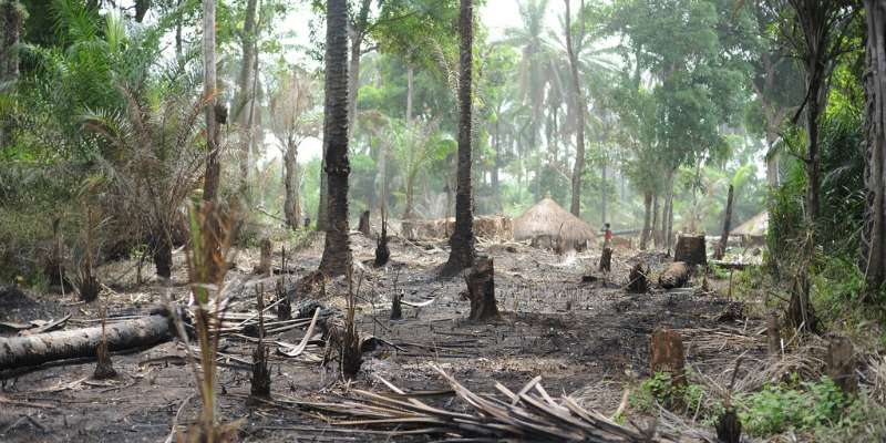 Lax rules put Congo's forests, key carbon reserve, at risk