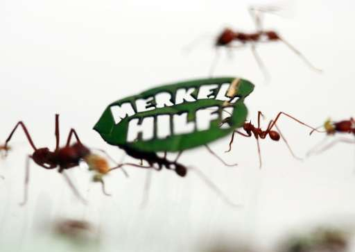 """Leafcutter ants run on a leaf, in which the words, """"Merkel Help!"""" in German were carved by the environmental organizat"""