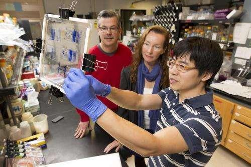 Link identified between virus recognition, destruction in bacterial immune system