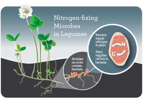 Long-term nitrogen fertilizer use disrupts plant-microbe mutualisms