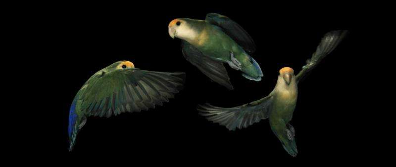 e713de6511c1 Lovebird rotates head 2700 degrees per second while turning ...