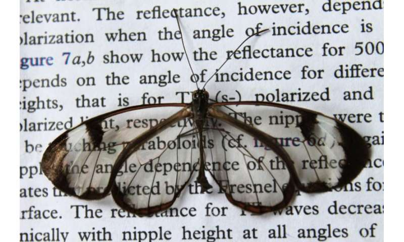 Low-reflection wings make butterflies nearly invisible