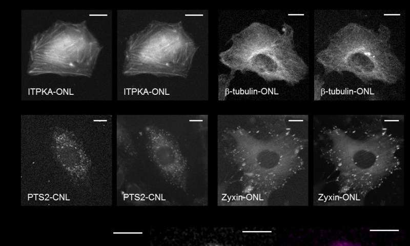 Luminescence imaging of intracellular microstructures