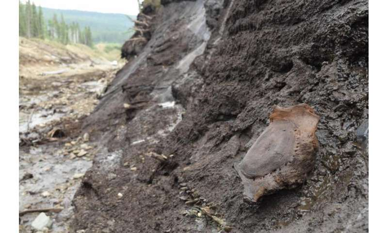 Mammoths killed by abrupt climate change