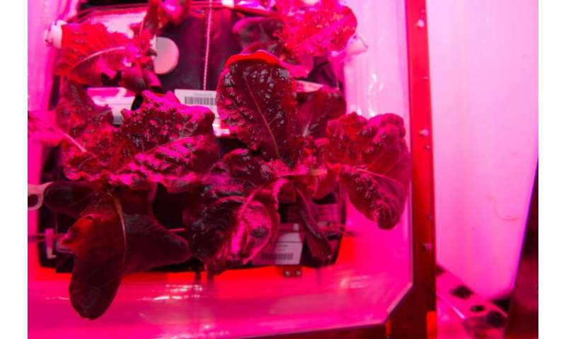 Meals ready to eat: Expedition 44 crew members sample leafy greens grown on space station