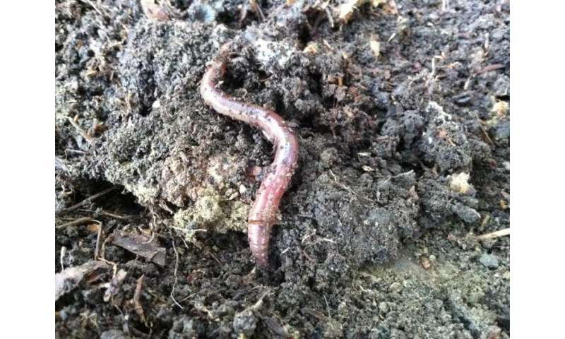 Metal pollutants in earthworms may threaten forest predators, Dartmouth-led study finds