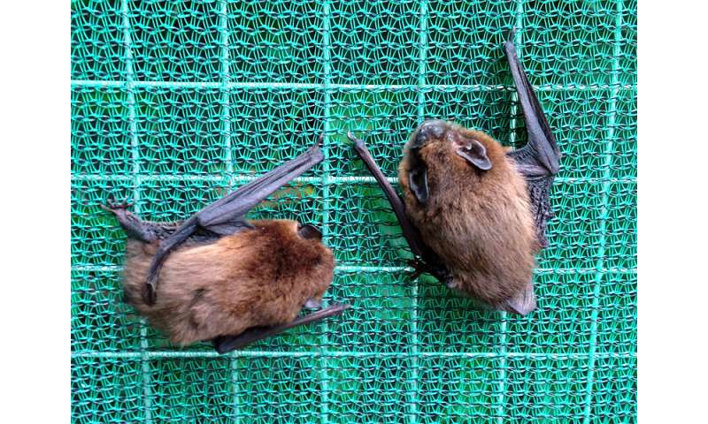 Minding the gap: City bats won't fly through bright spaces