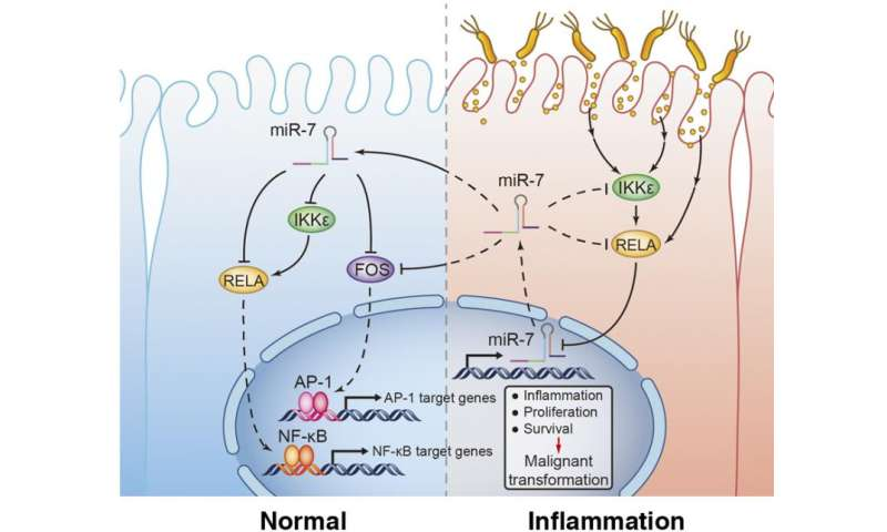 miR-7 suppresses stomach cancer