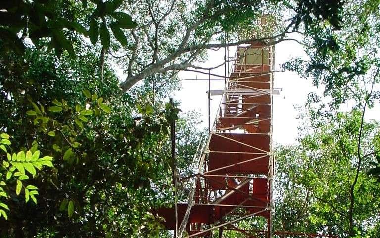 Modeling Amazonian transitional forest micrometeorology