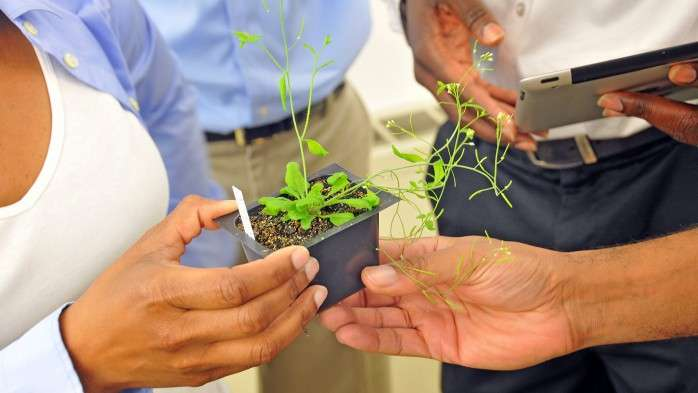 Modeling tool IDs genes that control stress response in plants